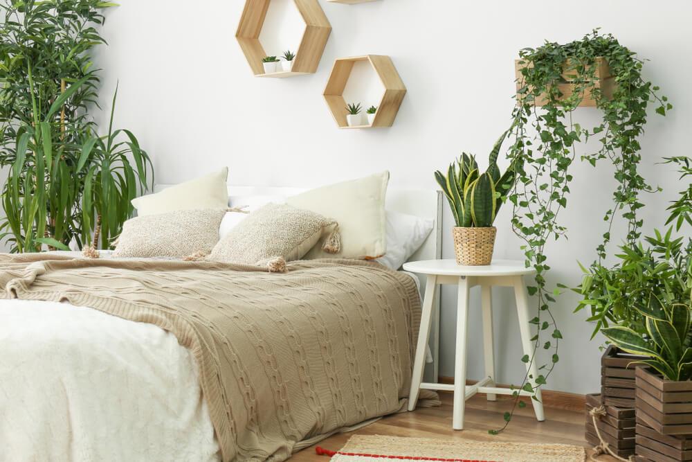 9 planten in de slaapkamer die je nachtrust verbeteren