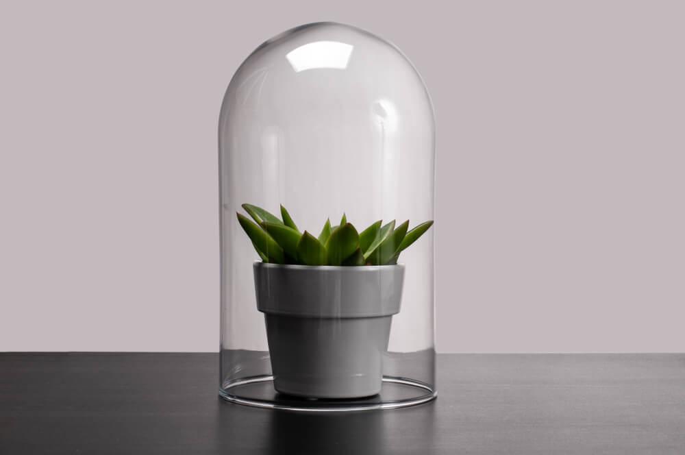 Hoe decoreer je een glazen stolp? Dít kun je er allemaal in kwijt!
