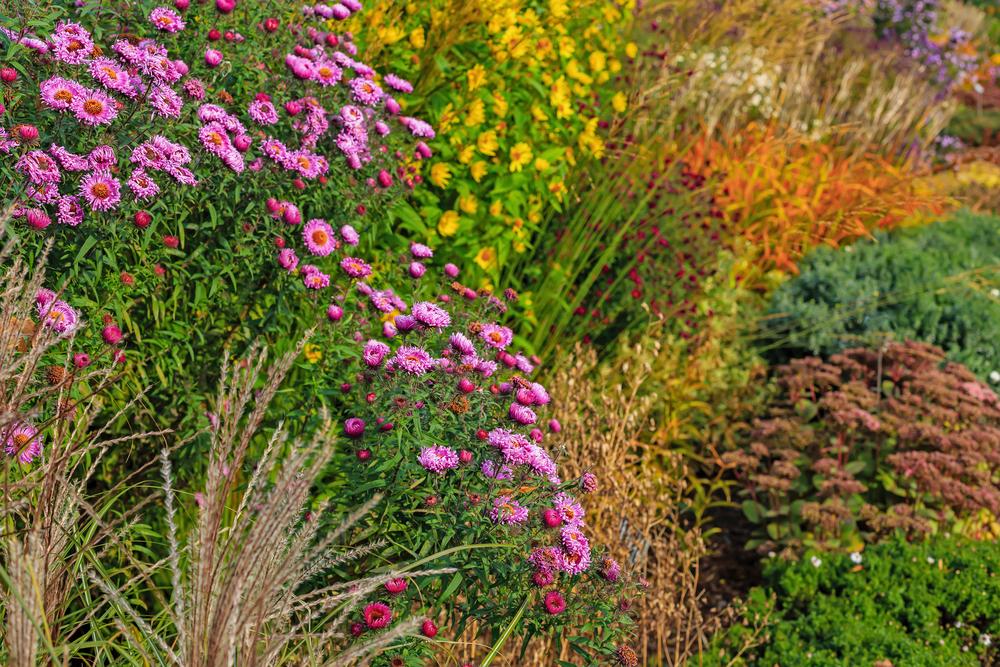 Mooie herfstbloeiers: déze 8 tuinplanten bloeien in het najaar