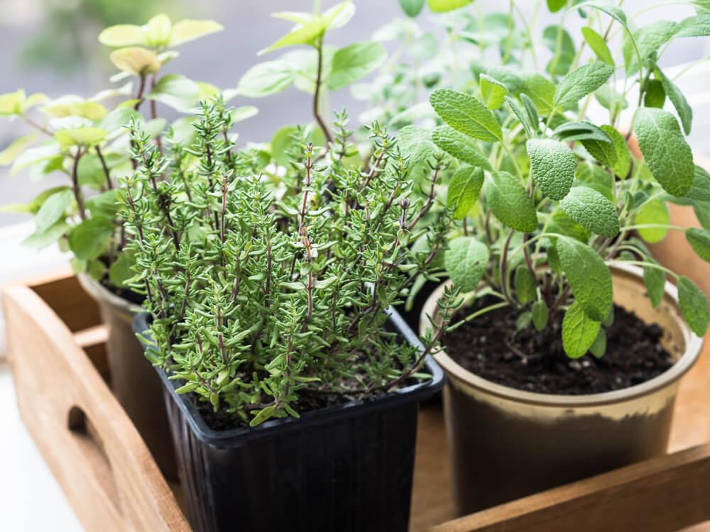 5 tips en tricks: zelf kruiden groeien in je tuin of op je balkon