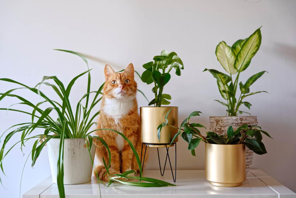 Katten en kamerplanten: wat moet je weten? Tips rondom giftigheid en meer!